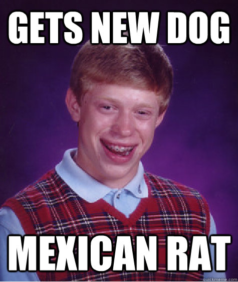 Gets New dog mexican rat - Gets New dog mexican rat  Bad Luck Brian