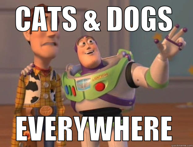 CATS & DOGS EVERYWHERE Toy Story