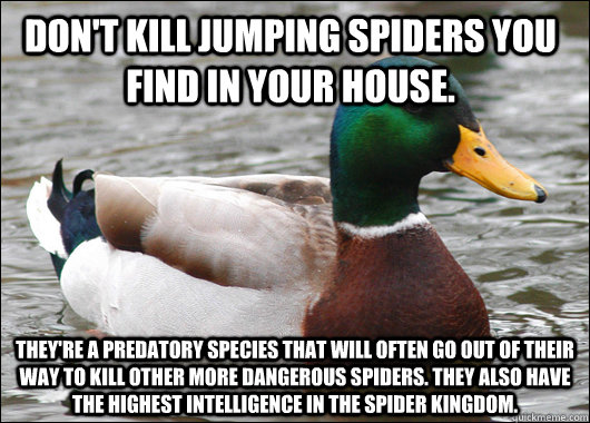 Don't kill jumping spiders you find in your house. They're a predatory species that will often go out of their way to kill other more dangerous spiders. They also have the highest intelligence in the spider kingdom.  - Don't kill jumping spiders you find in your house. They're a predatory species that will often go out of their way to kill other more dangerous spiders. They also have the highest intelligence in the spider kingdom.   Actual Advice Mallard