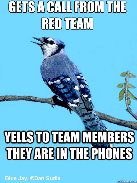 gets a call from the red team yells to team members they are in the phones - gets a call from the red team yells to team members they are in the phones  Blue Team Bird