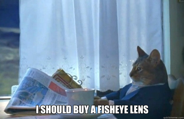 i should buy a fisheye lens - i should buy a fisheye lens  Sophisticated Cat