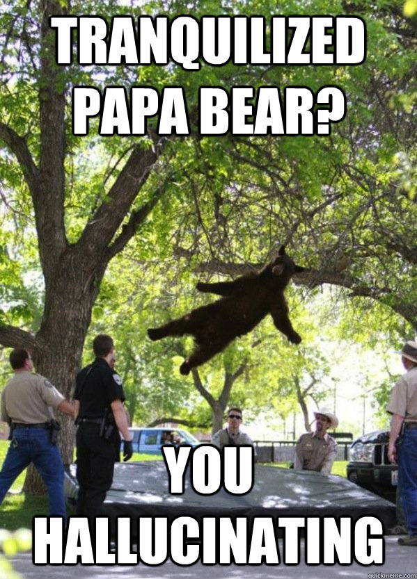 TRANQUILIZED PAPA BEAR? YOU HALLUCINATING  i am a falling bear