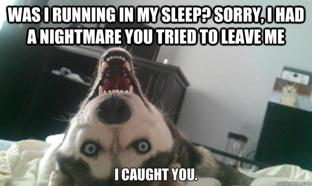was i running in my sleep? sorry, I had a nightmare you tried to leave me I caught you. - was i running in my sleep? sorry, I had a nightmare you tried to leave me I caught you.  Over Obsessive Dog