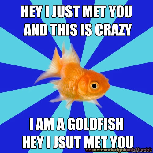 Hey I just met you  and this is crazy  i am a goldfish  hey i jsut met you