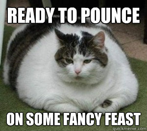 Ready to pounce on some fancy feast  Fat Cat