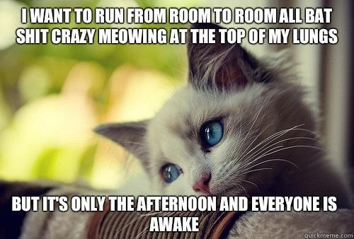 I want to run from room to room all bat shit crazy meowing at the top of my lungs  but it's only the afternoon and everyone is awake - I want to run from room to room all bat shit crazy meowing at the top of my lungs  but it's only the afternoon and everyone is awake  First World Problems Cat