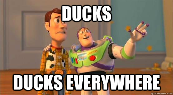 Ducks Ducks Everywhere
