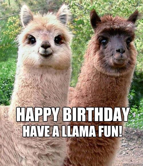 Llama Birthday Card – gangcraft.net