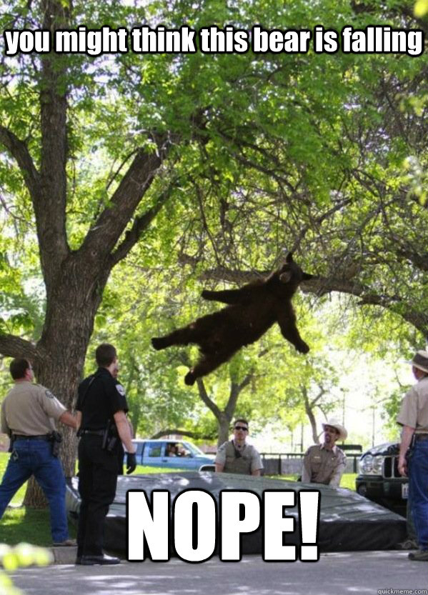 you might think this bear is falling NOPE!