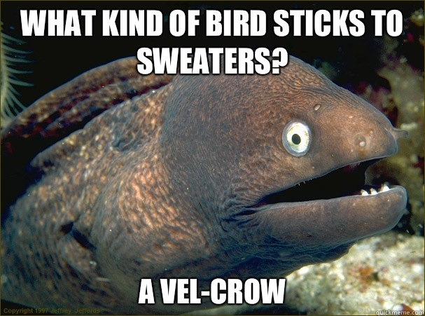 What kind of bird sticks to sweaters? A vel-crow - What kind of bird sticks to sweaters? A vel-crow  Bad Joke Eel