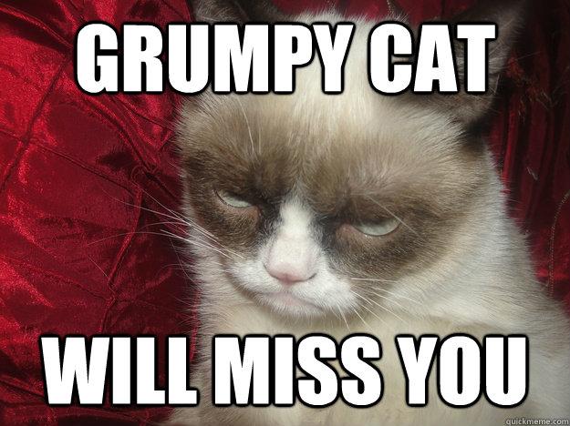 funny memes cat