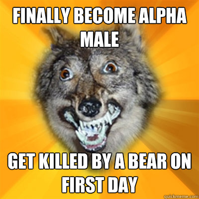 finally Become Alpha male get killed by a bear on first day  Retarded Wolf