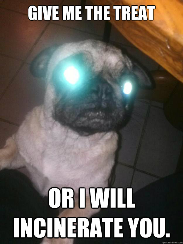 Give me the treat or i will incinerate you. - Give me the treat or i will incinerate you.  Misc