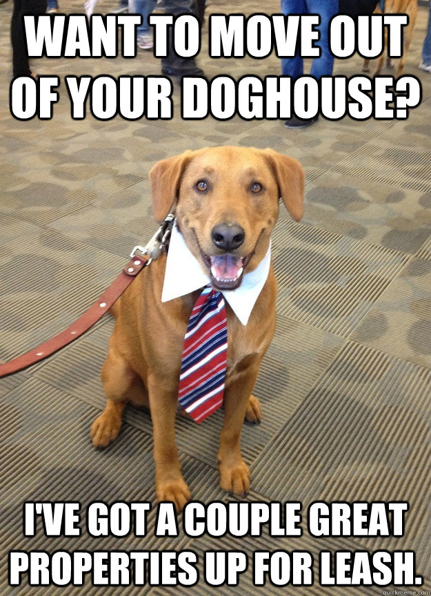 bc3c59dc556a16782f7a568956f8029d0fbc2fa636d88167cb05eae2d8f462d7 business dealing dog memes quickmeme,Doghouse Meme