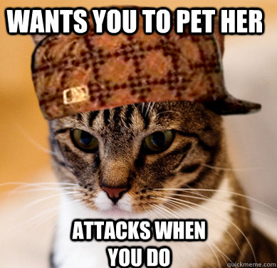 Wants you to pet her Attacks when you do - Wants you to pet her Attacks when you do  Scumbag Cat