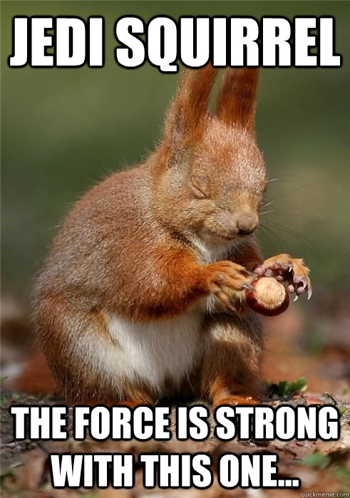 jedi squirrel the force is strong with this one