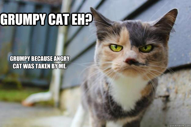 angry cat meme no - photo #27