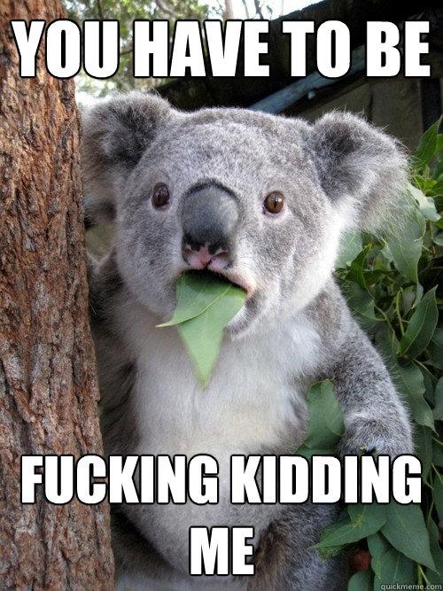 You have to be  fucking kidding me  Surprised Koala