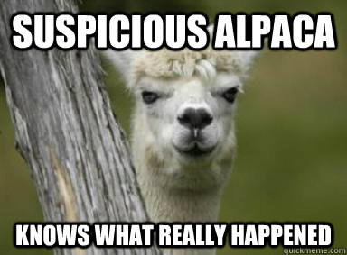 suspicious alpaca knows what really happened  Suspicious Alpaca