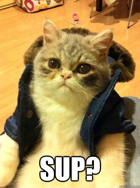 Sup? -  Sup?  Bro cat