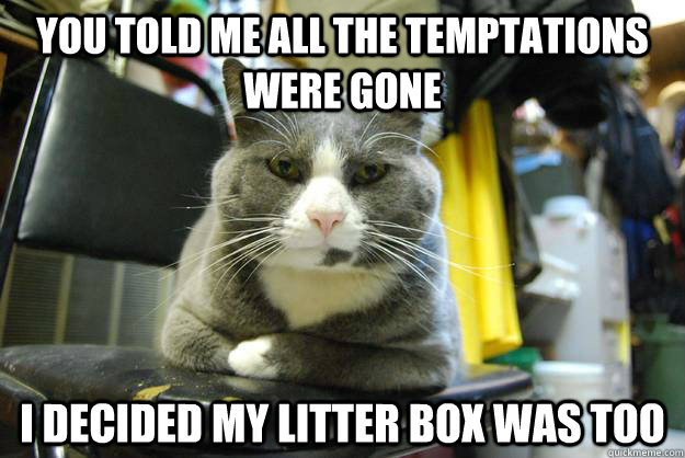 You told me all the temptations were gone I decided my litter box was too