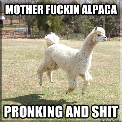 Mother fuckin alpaca pronking and shit