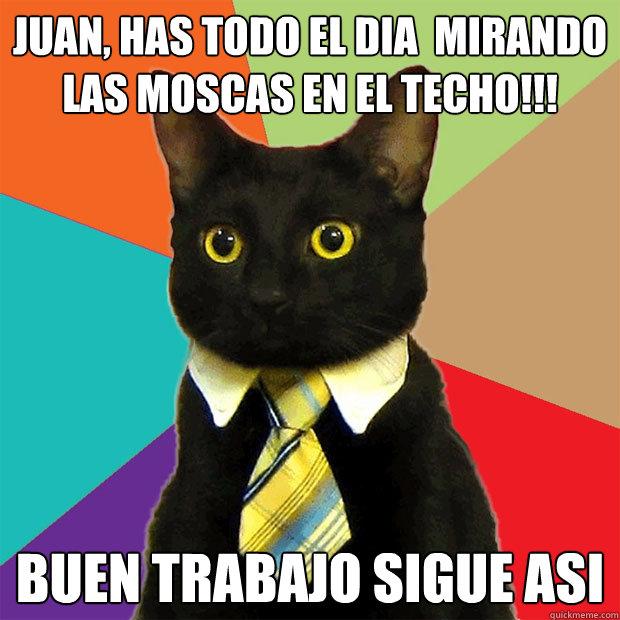 JUAN, HAS TODO EL DIA  MIRANDO LAS MOSCAS EN EL TECHO!!! BUEN TRABAJO SIGUE ASI - JUAN, HAS TODO EL DIA  MIRANDO LAS MOSCAS EN EL TECHO!!! BUEN TRABAJO SIGUE ASI  Business Cat