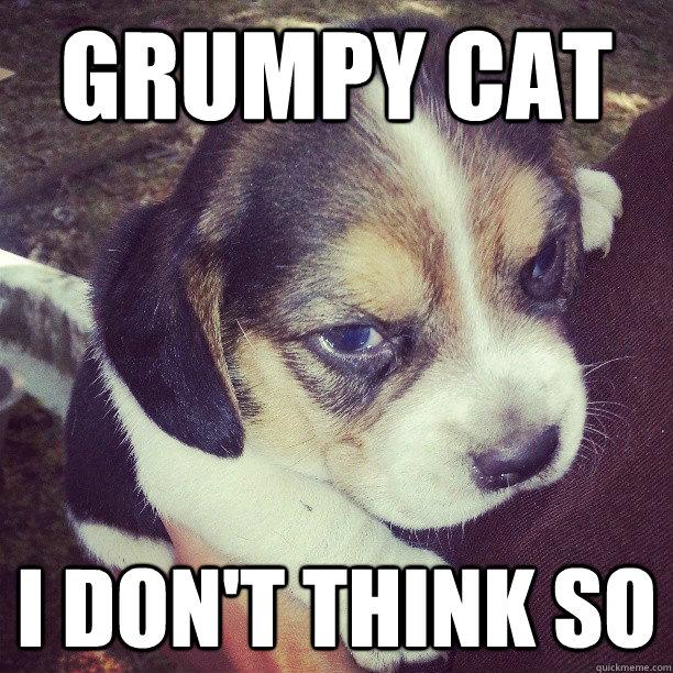 Grumpy cat I don't think so  Grumpy Dog