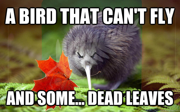 A BIRD THAT CAN'T FLY AND SOME... DEaD LEAVES