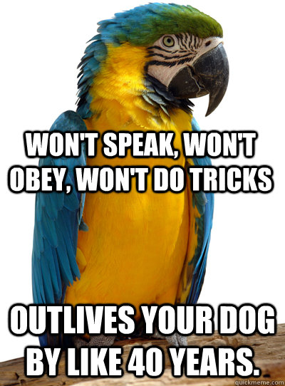 Outlives your dog by like 40 years. Won't speak, won't obey, won't do tricks