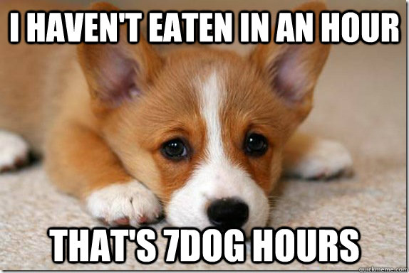 I haven't eaten in an hour That's 7dog hours - I haven't eaten in an hour That's 7dog hours  Misc
