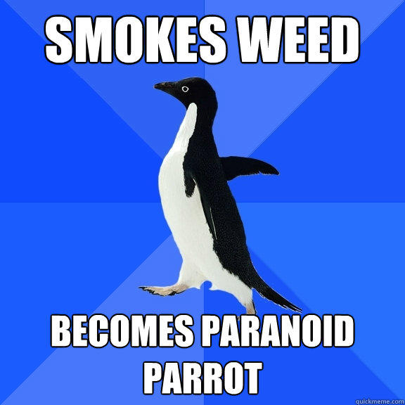 smokes weed becomes paranoid parrot - smokes weed becomes paranoid parrot  Socially Awkward Penguin