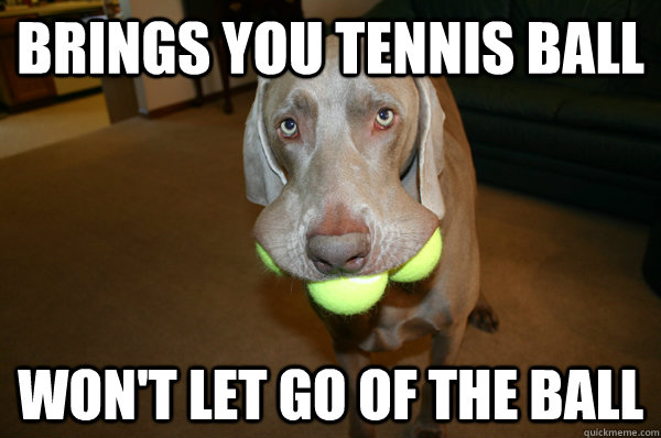 Brings you tennis ball won't let go of the ball