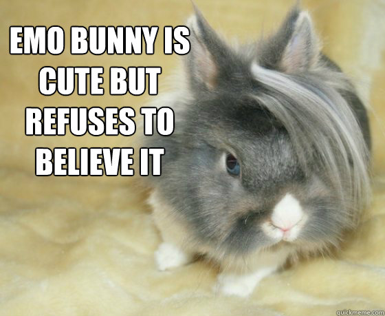 emo bunny is cute but refuses to believe it