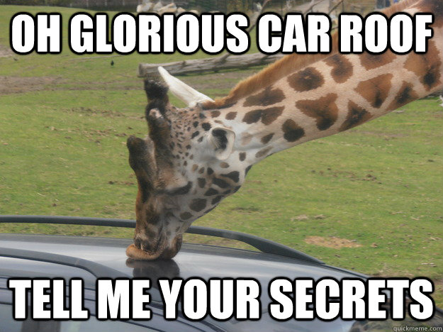 Oh glorious car roof Tell me your secrets