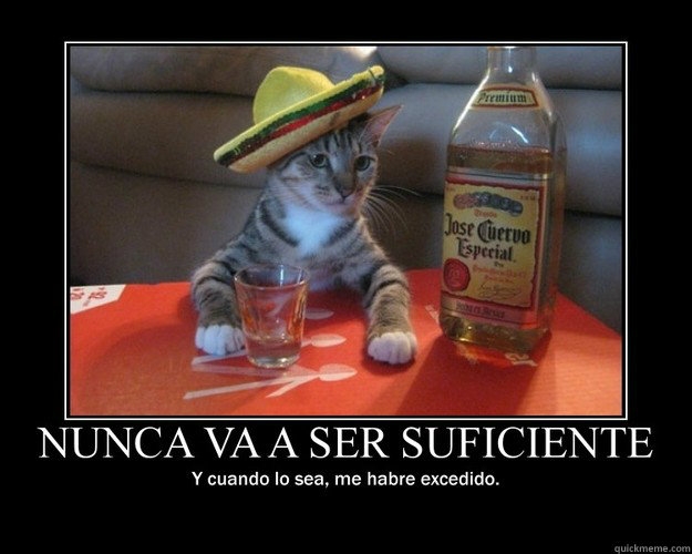 -    Tequila cat - inspirational
