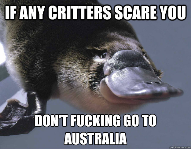 If any critters scare you don't fucking go to Australia  - If any critters scare you don't fucking go to Australia   Platypus