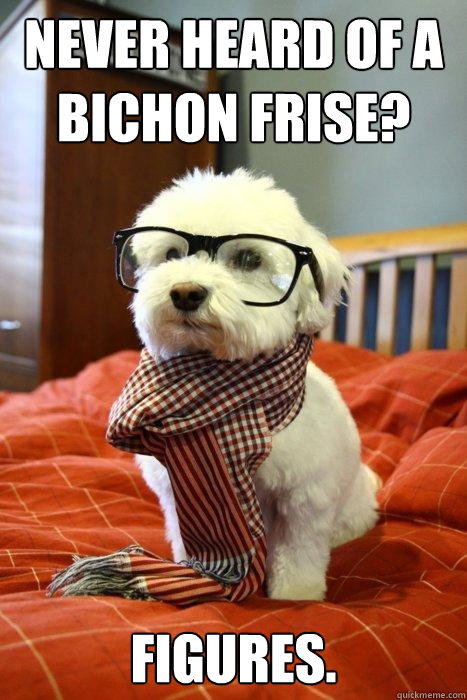Never heard of a bichon frise? Figures.  Hipster Dog