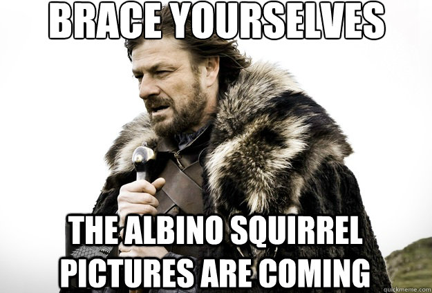 Brace Yourselves the albino squirrel pictures are coming