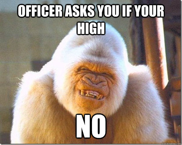 officer asks you if your high no