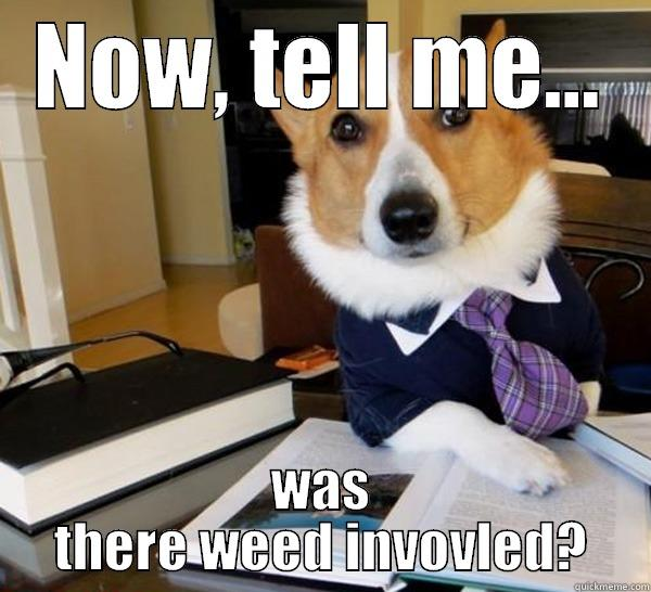 Lawyer corgi asks about weed - NOW, TELL ME... WAS THERE WEED INVOVLED? Lawyer Dog