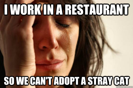 i work in a restaurant so we can't adopt a stray cat - i work in a restaurant so we can't adopt a stray cat  First World Problems