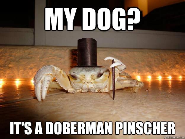 My dog? It's a doberman pinscher  Fancy Crab