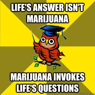 Life's answer isn't marijuana Marijuana invokes life's questions  Observational Owl