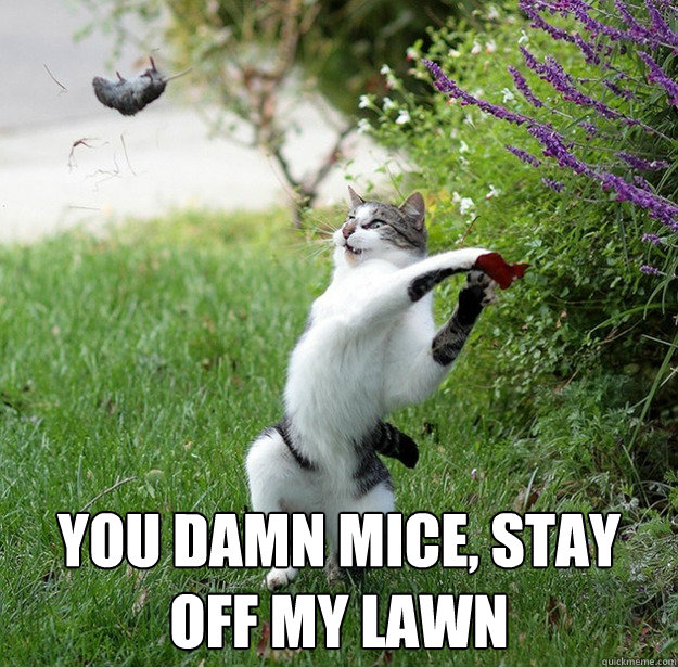 you damn mice, stay off my lawn -  you damn mice, stay off my lawn  Misc