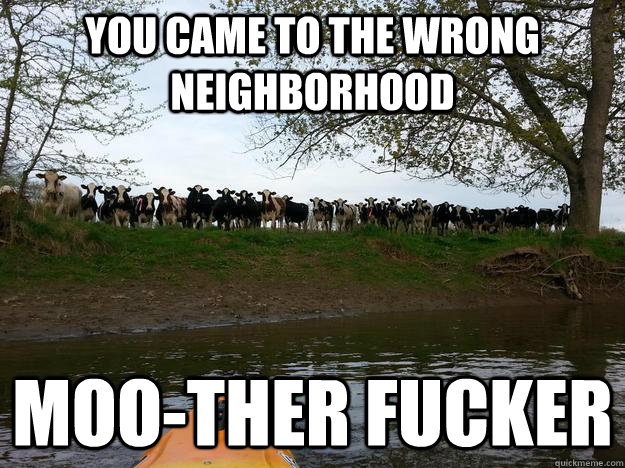 you came to the wrong neighborhood moo-ther fucker - you came to the wrong neighborhood moo-ther fucker  Misc