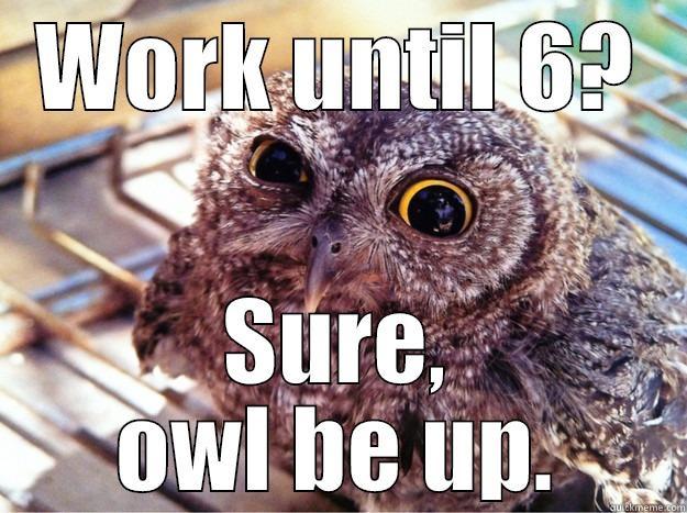 WORK UNTIL 6? SURE, OWL BE UP. Skeptical Owl