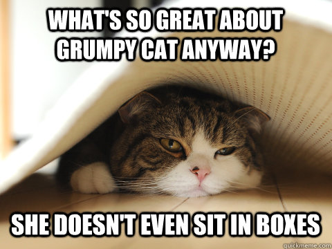 What's so great about grumpy cat anyway? She doesn't even sit in boxes - What's so great about grumpy cat anyway? She doesn't even sit in boxes  Misc