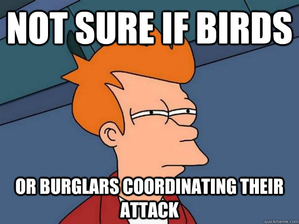 Not sure if birds Or burglars coordinating their attack - Not sure if birds Or burglars coordinating their attack  Futurama Fry