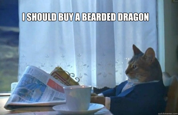 I should buy a bearded dragon - I should buy a bearded dragon  Sophisticated Cat
